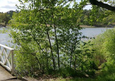 Bro vid sjön